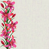 Pale background with red tiger lily flowers, leaves and buds Royalty Free Stock Photos
