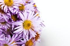 Pale blue chrysanthemum Royalty Free Stock Photos