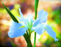 Pale Blue Water Iris Painted Digital Imágenes de archivo libres de regalías