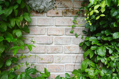 Pale brick wall with green leaves border Royalty Free Stock Images