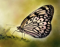 Pale Butterfly - Watercolor Painting. Digital watercolor painting of a pale colored butterfly with a beautiful wing pattern Royalty Free Stock Photos