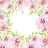 Pale color tender rose flowers. Stock Photography
