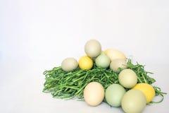 Pale Colored Eggs på gräs med vit bakgrund Royaltyfria Bilder