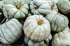 Pale Green Frankenstein Pumpkins Royalty Free Stock Photography