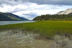 Pale green marsh grasses at Muncho Lake, northern British Columbia Stock Image