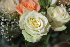 Pale Green Rose Lizenzfreies Stockbild
