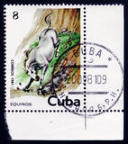 Pale horse plunging down a cliff face, circa 1981. MOSCOW, RUSSIA - FEBRUARY 12, 2017: A used postage stamp printed in Cuba from the `Horses` issue, showing a royalty free stock photos