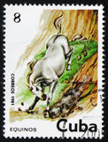 Pale horse plunging down a cliff face, circa 1981. MOSCOW, RUSSIA - FEBRUARY 19, 2017: A used postage stamp printed in Cuba from the `Horses` issue, showing a royalty free stock photos