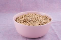 Pale malt in pink bowl on purple textile background. Craft beer. Brewing from grain barley malt in process. Ale or lager from pale or dark pilsner malt Royalty Free Stock Photos