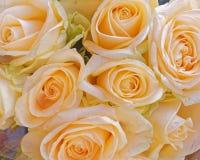Pale orange rose flowers natural background. Pale orange rose flowers top view, colorful natural background stock image