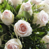 Pale orange Roses. Bouquet of pale orange roses with creme surrounding Stock Photo