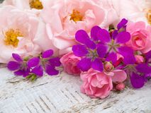 Pale pink and bright pink roses and geranium bouquet. Pale pink and small bright pink roses and geranium bouquet on the white rough wooden table Royalty Free Stock Image