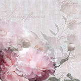 Pale pink floral design pink peonies Royalty Free Stock Images