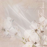 Pale pink floral design white  iris Royalty Free Stock Photography