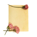 Pale pink flower and vintage paper Royalty Free Stock Photos