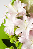 Pale pink lilies Stock Photo