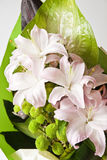 Pale pink lilies Stock Photography