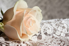 Pale pink rose. On a wedding lace Royalty Free Stock Photos