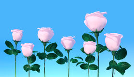 Pale pink roses in blue sky background. Royalty Free Stock Images