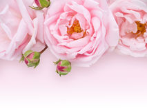 Pale pink roses bouquet Stock Images