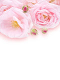 Pale pink roses bouquet Stock Photo
