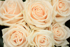 Pale pink roses. In a floral arrangement at a wedding Royalty Free Stock Photography