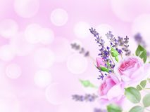Pale pink roses and lavender in the corner of the blurred background stock photos