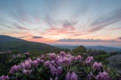 Pale Pink Sky Mirrors Pink rhododendron Arkivbild