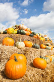 Pale of pumpkins Royalty Free Stock Image