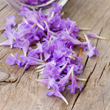 Pale purple flower petals rained down from the glass jars Stock Image