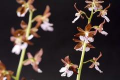 Pale purple flowers Stock Photo