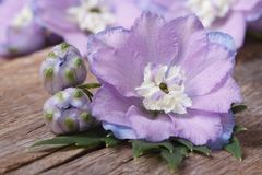 Pale purple flowers delphinium with buds macro Stock Images