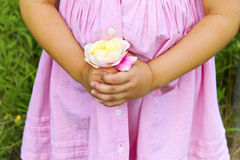 Pale rose in children's hands Stock Image