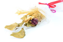 Pale rose and dry leaves, Stock Photos