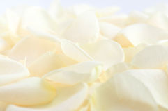 Pale rose petals. Abstract background of fresh pale rose petals royalty free stock photo