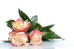 Pale Roses Stock Afbeeldingen