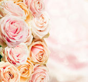 Pale  roses border Royalty Free Stock Photo