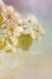 Pale Spring Imágenes de archivo libres de regalías