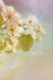 Pale Spring Royalty Free Stock Images