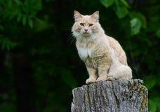 Pale yellow cat sitting on a tree stump. Stock Image