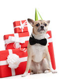Pale yellow doggy in green fool's cap Stock Photos