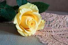Pale yellow rose Stock Photo
