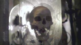 Palella umana reale video d archivio