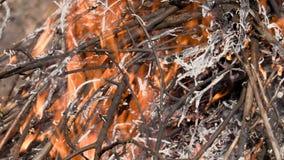 Palenie suche gałązki i liście pożar ogień Materiał filmowy 4K HD, Ultra, UHD zbiory wideo