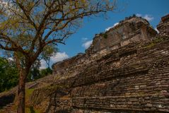 Palenque, Chiapas, Mexico: Ancient Mayan pyramid with steps among the trees in Sunny weather. Ancient Mayan city Royalty Free Stock Photo