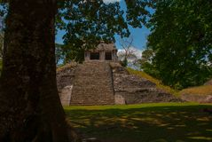 Palenque, Chiapas, Mexico: Ancient Mayan pyramid with steps among the trees in Sunny weather. Ancient Mayan city Stock Images