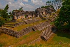 Palenque, Chiapas, Mexique : Ville maya antique parmi des arbres par temps ensoleillé Images libres de droits