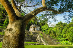 Palenque Tree and Temple Stock Images