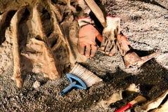 Paleonthology挖掘站点 图库摄影