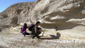 Paleontological έρευνα απόθεμα βίντεο